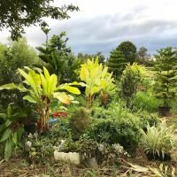 Cycads, Ferns and Palms