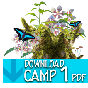 PDF_button_camp1